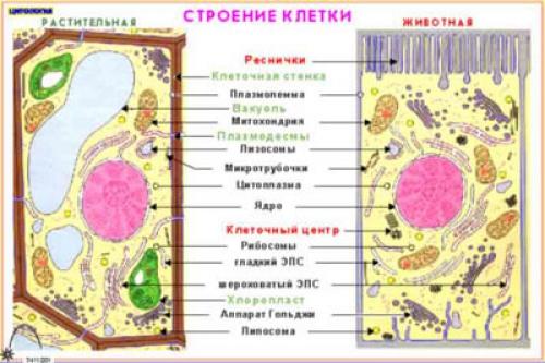 "Фолии ""Цитология"" (16 пленок)"