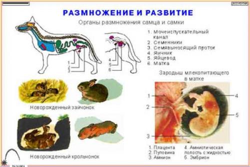 """Фолии """"Зоология. Млекопитающие"""" (16 пленок)"""