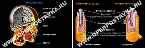 """Слайд-альбом """"Человек и его здоровье"""" (100 слайдов)"""
