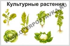 """Фолии """"Культурные растения"""" (20+4)"""