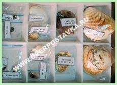 """Коллекция """"Многообразие раковин моллюсков """""""