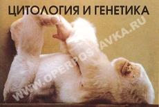"""Слайд-альбом """"Цитология и генетика """" (80 слайдов)"""