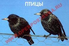 """Слайд-альбом """"Птицы"""" (100 слайдов)"""
